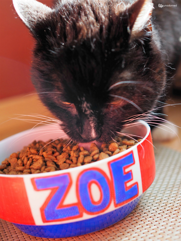 Zoe the cat eating Nutrish