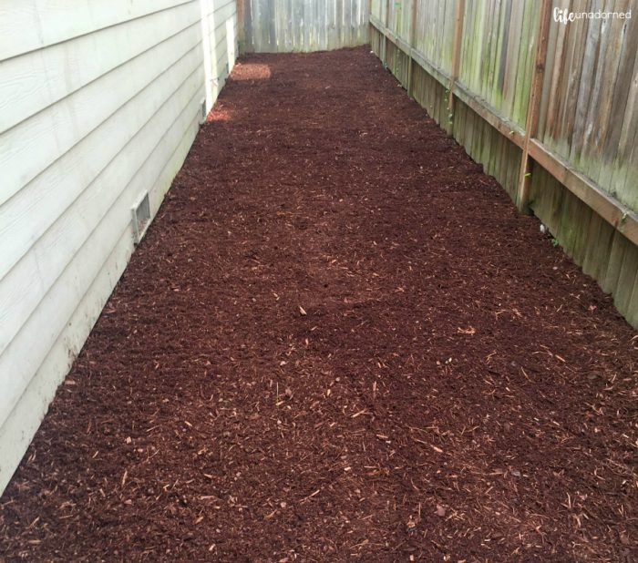 backyard with mulch
